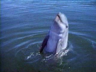 Flipper Trailer 1 - Flipper - Flixster Video