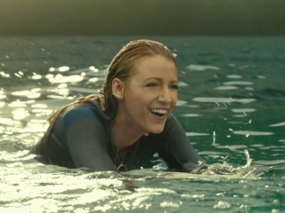 The Shallows: Dolphins
