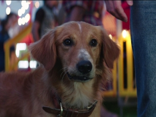 A Dog's Purpose: Bailey Notices A New Smell On Ethan