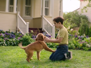 A Dog's Purpose: Bailey Learns His Place In The Pack