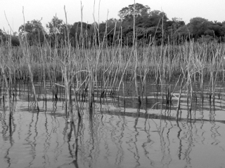 Paraguay Remembered: Water