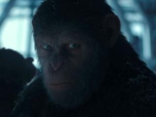 Bad Ape Cutdown