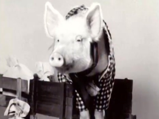Green Acres: Arnold The Pig