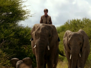 Phoenix Wilder: And The Great Elephant Adventure