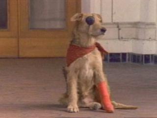 Sherlock Undercover Dog