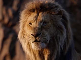 Le Retour Du Roi Lion