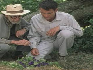 Greenfingers Scene Discover The Violets