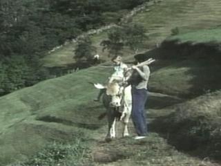 Vacas Cows
