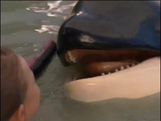 Free Willy Escape From Pirates Cove Tv Spot 3