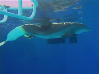 Dolphin Tale Featurette 1