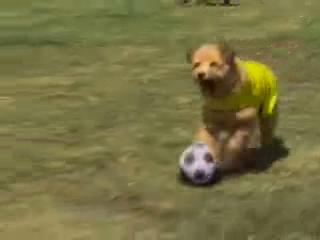 Soccer Dog European Cup