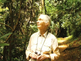 Jane Goodall Live