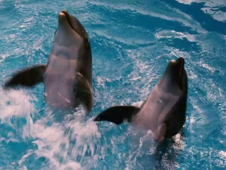 Dolphin Tale Featurette 2