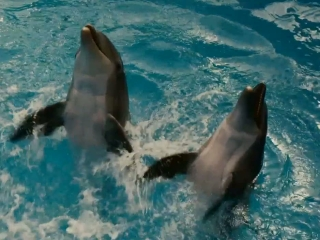Dolphin Tale And These Are The Upstairs Pools