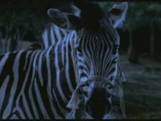 RACING STRIPES SCENE: I'M ALREADY ON YOUR SIDE