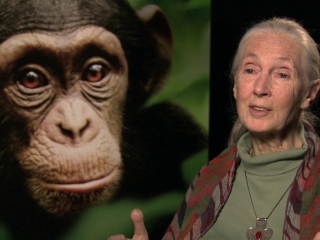 Chimpanzee See Chimps Save Chimps