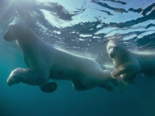 To The Arctic 3d Life Under Water Featurette