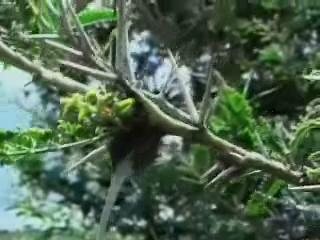 The Jeff Corwin Experience: Out On A Limb Scene: Hidden Viper
