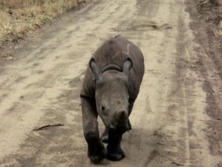 My Wild Affair: The Rhino Who Joined The Family