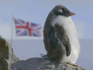 Nature: Penguins Post Office