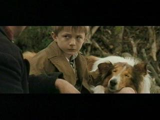 Lassie Scene I Never Want Another Dog