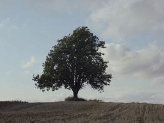 Blind (US Trailer 1)