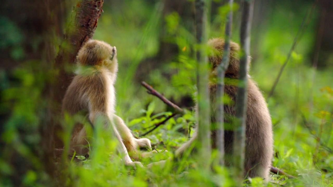 Born In China: Monkey-ing Around