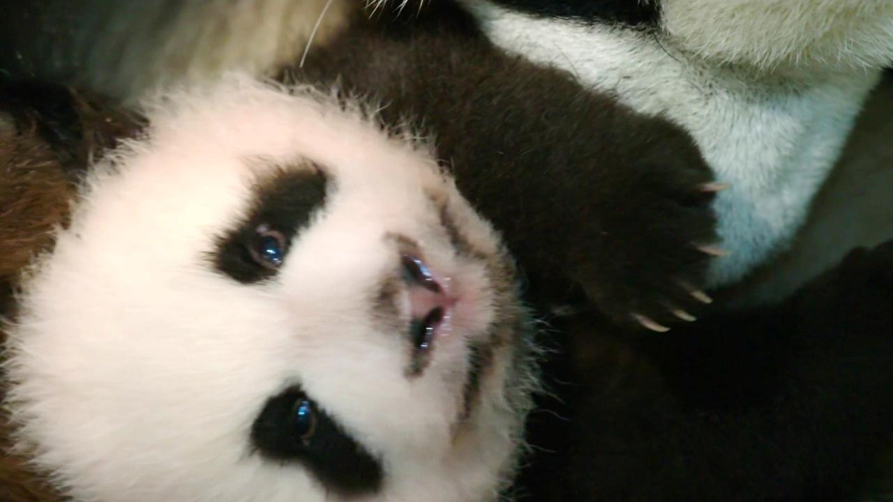 Born In China: Meet Ya Ya And Mei Mei