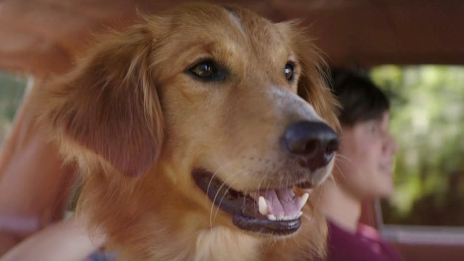 A Dog's Purpose: Story Behind The Story