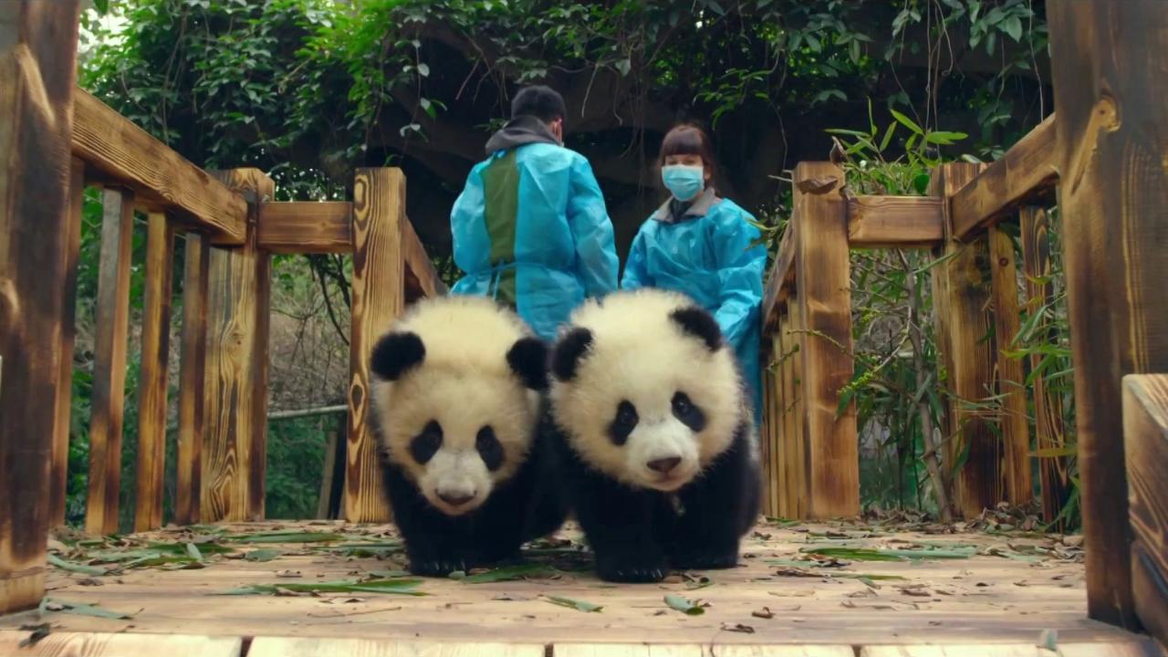 Pandas: Mission (TV Spot)