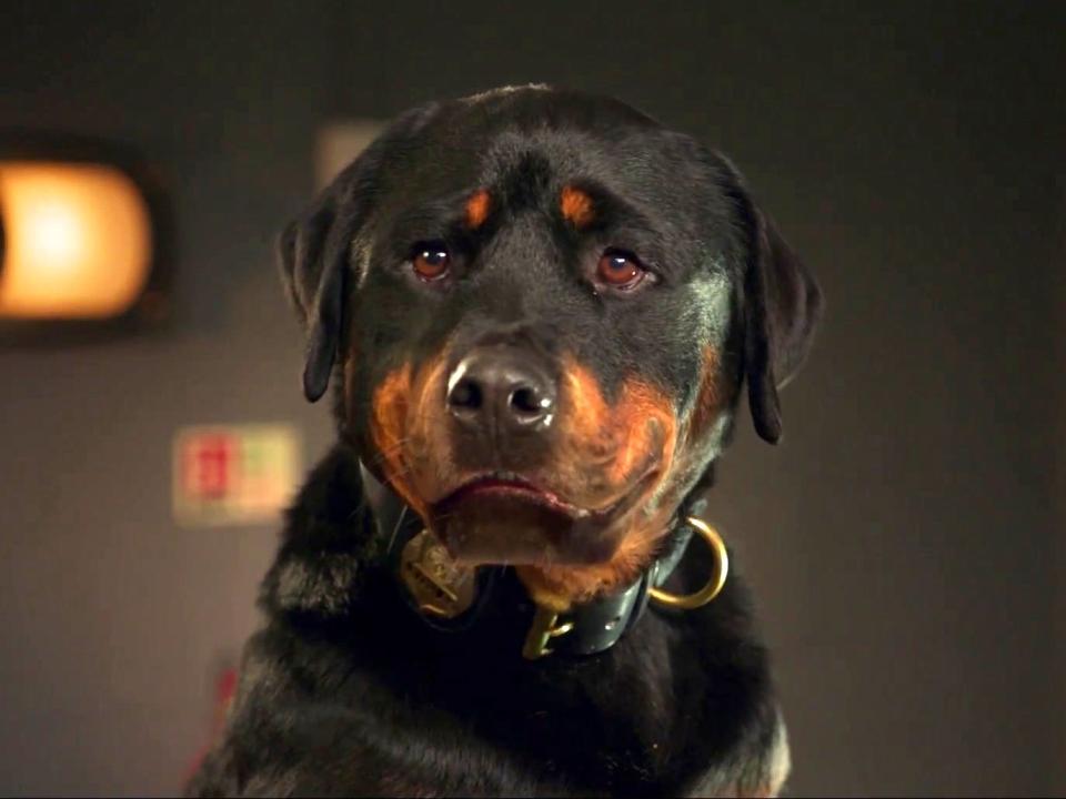 Show Dogs: Unfurgettable (TV Spot)