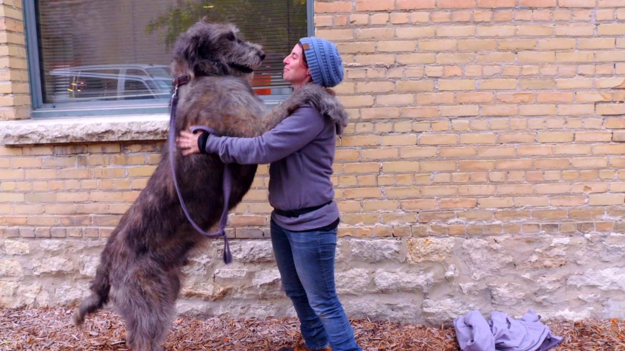 A Dog's Journey: The Cameron Chronicles (Featurette)