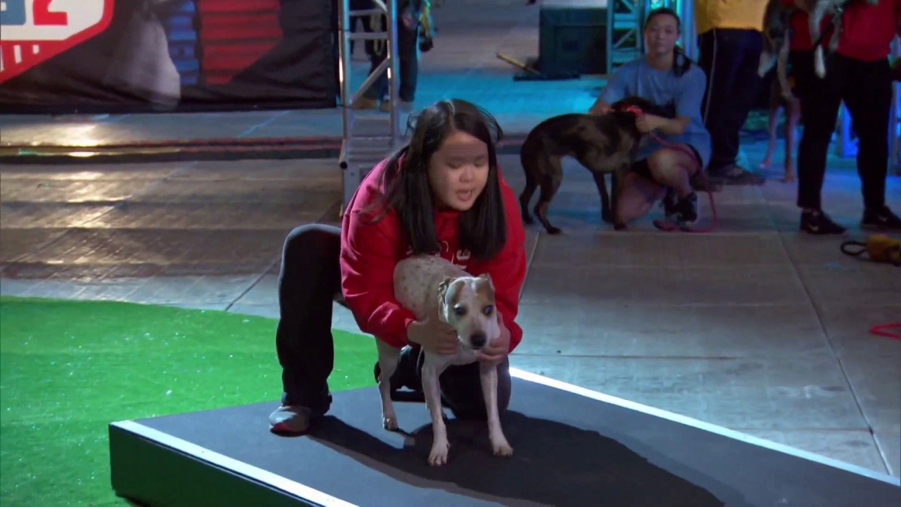 American Ninja Warrior: Adorable Pups Climb The Doggy Warped Wall