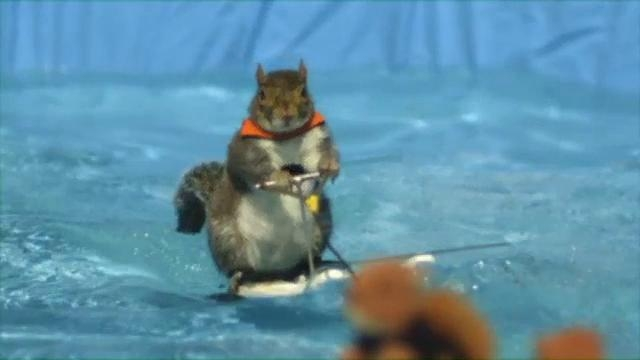 America's Got Talent: Twiggy The Water Skiing Squirrel