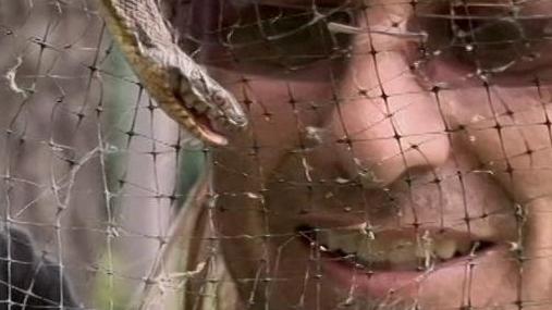 Billy The Exterminator: Spider Invasion