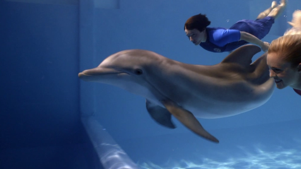 Dolphin Tale 2: Bethany And Swayer Swim With Winter