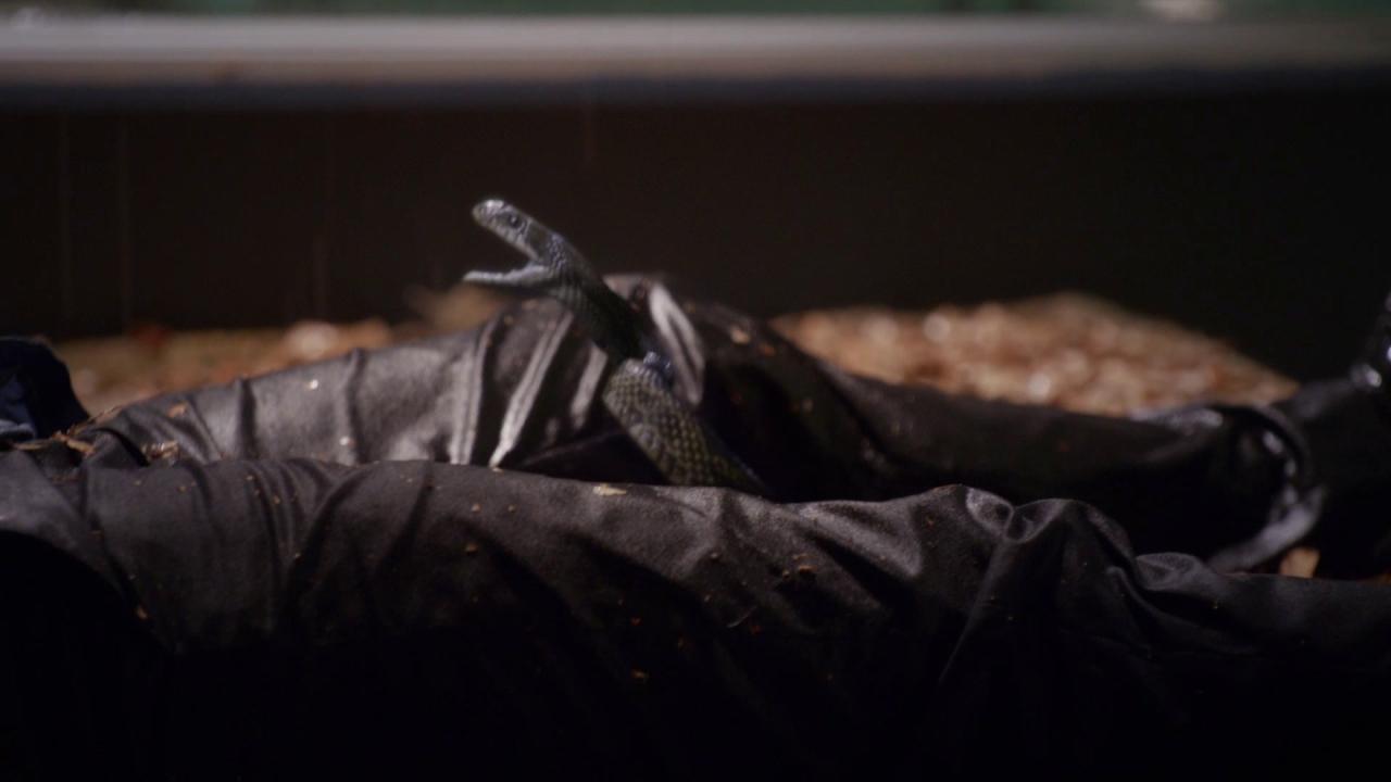 Scorpion: Once Bitten, Twice Die