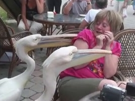 World's Funniest Fails: Kiss Or Eat You