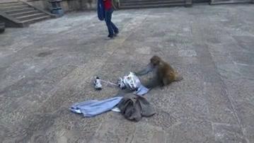 World's Funniest Fails: Animals: Nature's Biggest Jerks