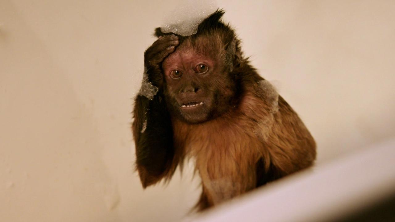 Monkey Up (Trailer 1)