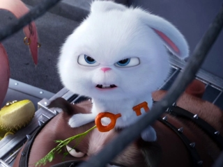The Secret Life Of Pets: Who Are We?