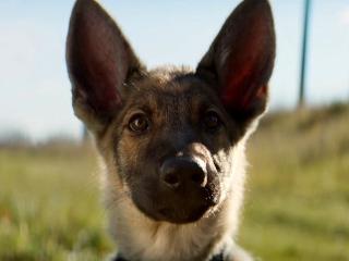A Dog's Purpose (International Home Ent. Trailer)