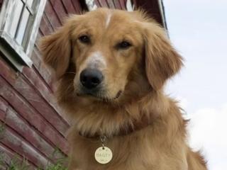 A Dog's Purpose: A Dog's Purpose