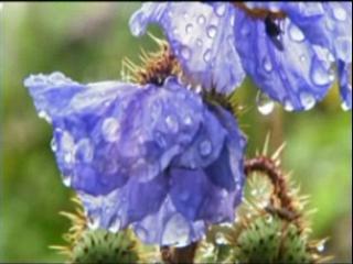 Nova: First Flower (2)
