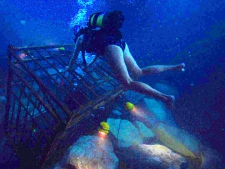 47 Meters Down: Not Safe Anymore