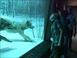 Wonderstruck: American Museum Of Natural History (Featurette)