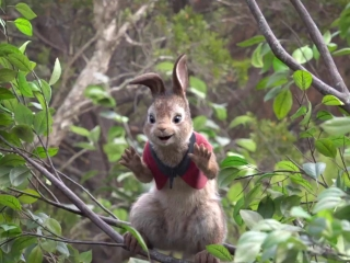 Peter Rabbit: Margot Robbie As 'Flopsy' (Vignette)