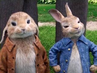 Peter Rabbit: Three-Card Monte