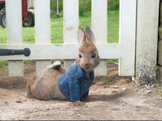 Peter Rabbit: Let's Do This