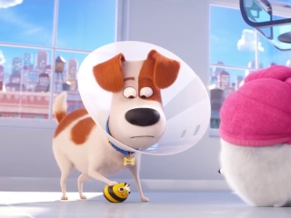 The Secret Life Of Pets 2: The Busy Bee